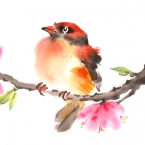 oriole among blossoms
